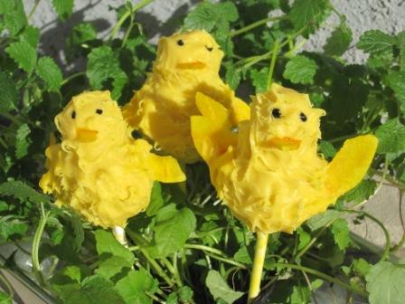 Kycklingpops