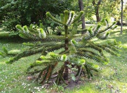 Coola växter i parken på Kungsholmens fort, Karlskrona, Livsaptit