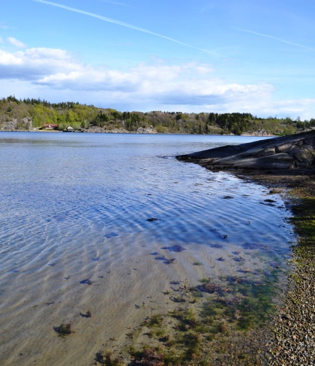 Gullmarsfjorden, kristallklart vatten, Vann, Besök av Livsaptit
