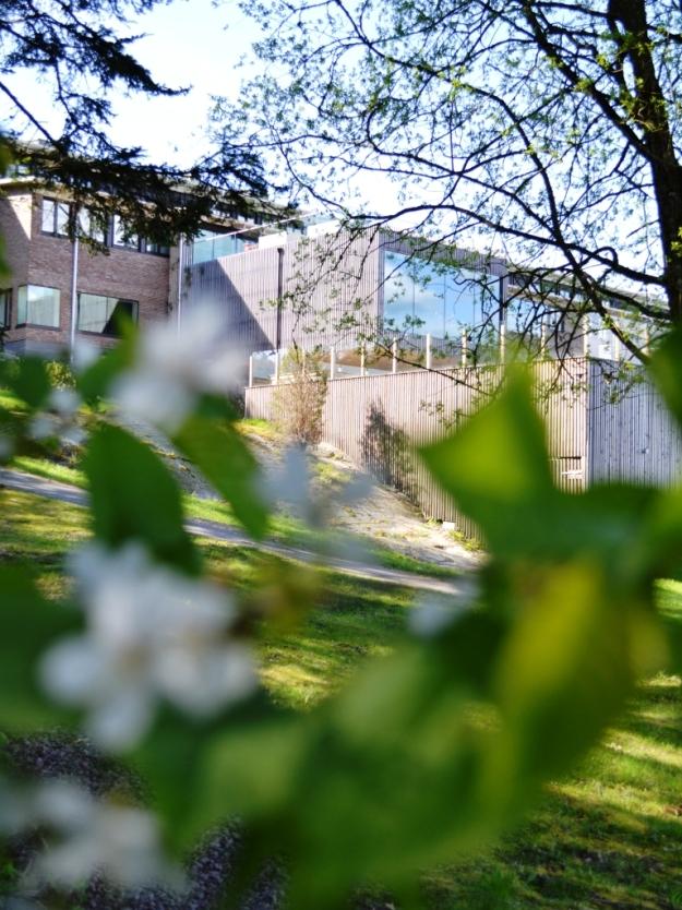 Hotellet från vattnet, genom blommträd, Vann, Besök av Livsaptit