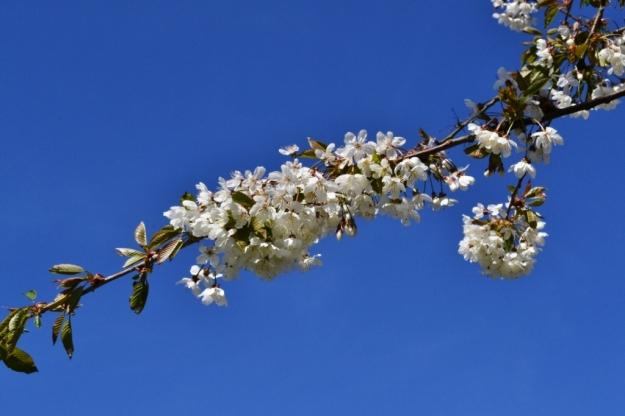 Omgivningar, blommande träd, Vann, Besök av Livsaptit